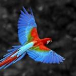 papagaljpg