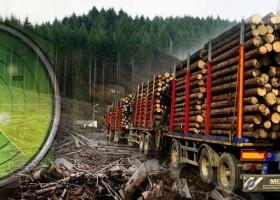Radarul Pădurilor ține hoții de lemne la distanță