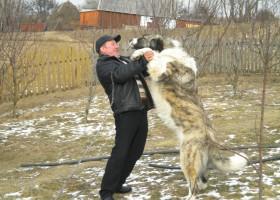 I-a furat câinele de pază din curte