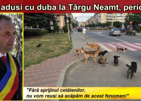 """Câinii vagabonzi, """"deportați"""" la Târgu Neamț. Apel către cetățenii orașului:"""