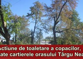 """Copacii din toate zonele orașului, """"aranjați"""" de Primărie"""