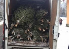 Duminica se fură pomi de Crăciun