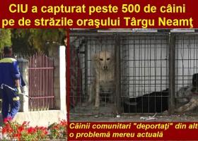 Peste 500 de câini strânşi de pe străzile oraşului Târgu Neamţ