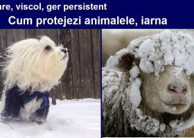 Protejați animalele în perioadele cu temperaturi foarte scăzute, vânt puternic şi căderi masive de zăpadă!