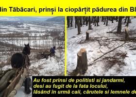 Rromii din Tăbăcari, prinși la furat lemne