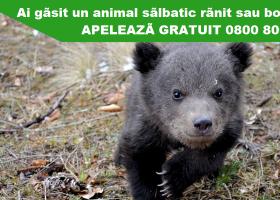 TELVERDE pentru salvarea animalelor sălbatice aflate în dificultate
