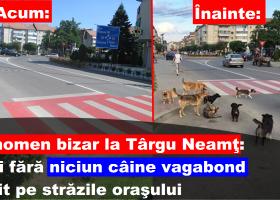 Ciudăţenia zilei: niciun câine maidanez pe străzile oraşului Târgu Neamţ