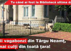 La Târgu Neamț sunt cei mai culți câini vagabonzi!