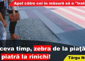 """Târgu Neamţ: Zebră """"cu piatră la rinichi"""" de mai bine de o săptămână"""
