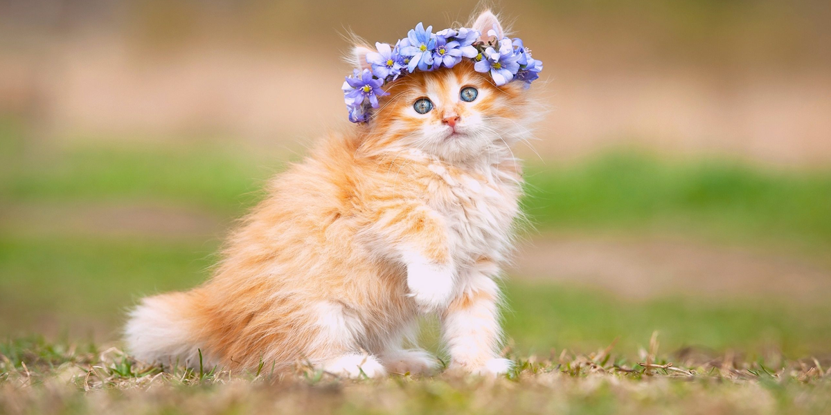 Ziua Internațională a Femeii - YouTube |Ziua Internațională A Pisicii